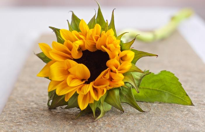 flower-629674_1920.jpg